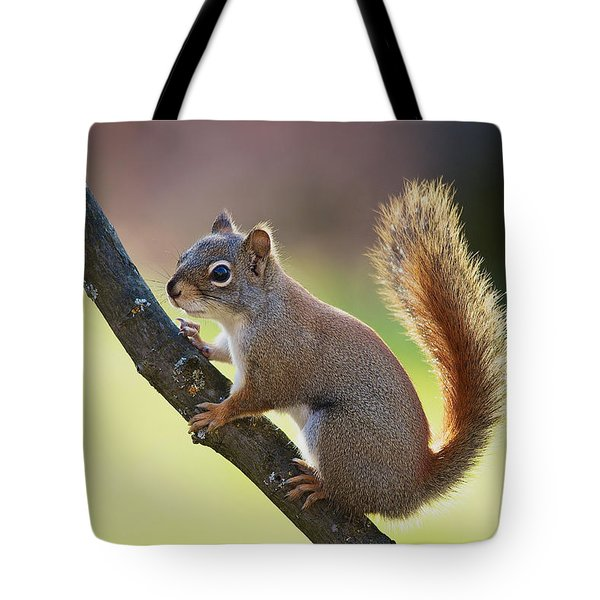 Tote Bag featuring the photograph Red Squirrel - Ecureuil Roux by Nature and Wildlife Photography