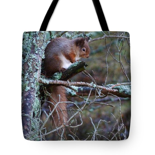 Tote Bag featuring the photograph Red Squirrel On Pine Tree by Phil Banks