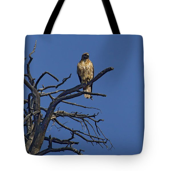Red-tail Hawk   #0622 Tote Bag by J L Woody Wooden