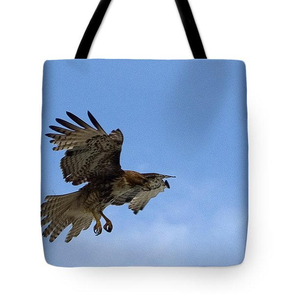Red Tail Hawk Tote Bag by Bill Gallagher