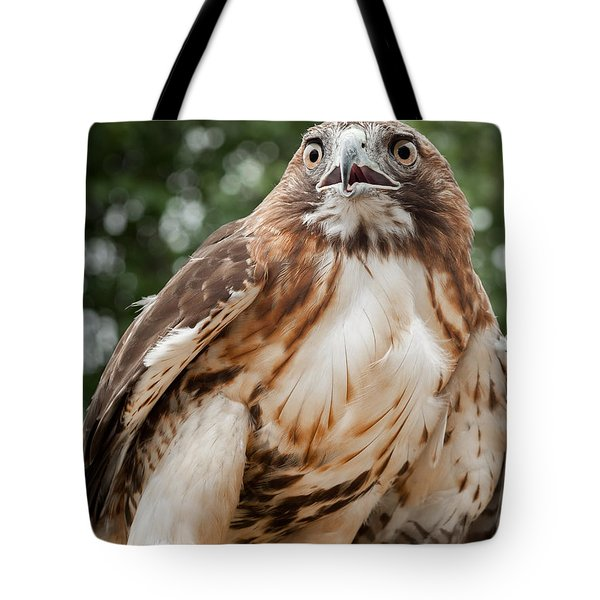 Red Tail Hawk Tote Bag by Bill Wakeley