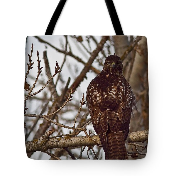 Tote Bag featuring the photograph Red Tail Hawk by Brian Williamson