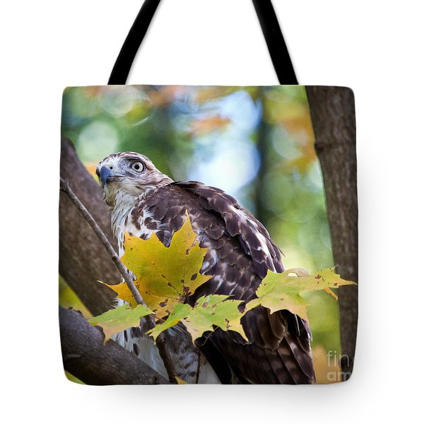 Red Tail Hawk Closeup Tote Bag by Eleanor Abramson