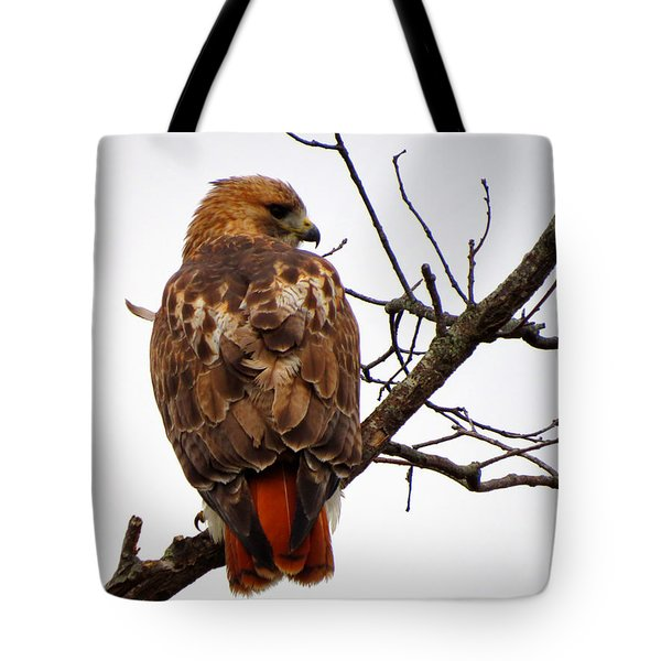 Red Tail Hawk In Winter Tote Bag by Dianne Cowen