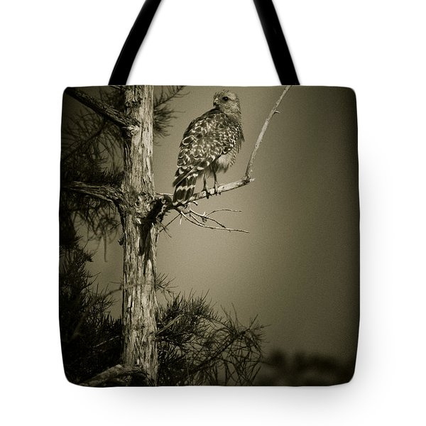 Red Tail Hawk On Loop Road Tote Bag by Bradley R Youngberg