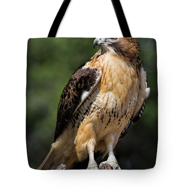 Red Tail Hawk Portrait Tote Bag