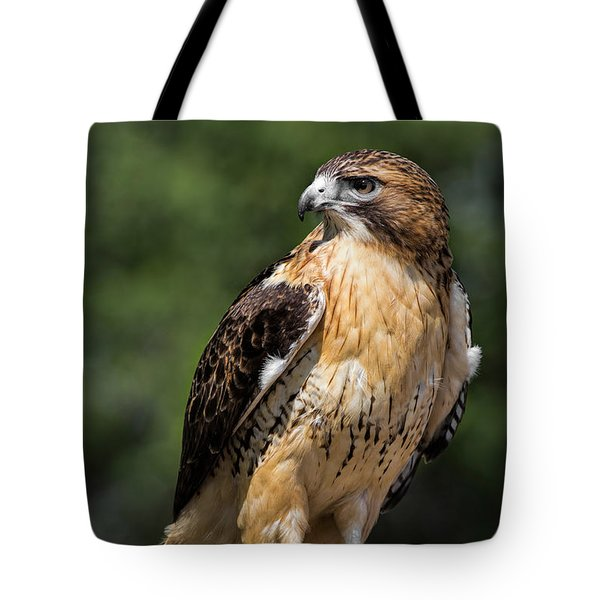 Red Tail Hawk Portrait Tote Bag by Dale Kincaid