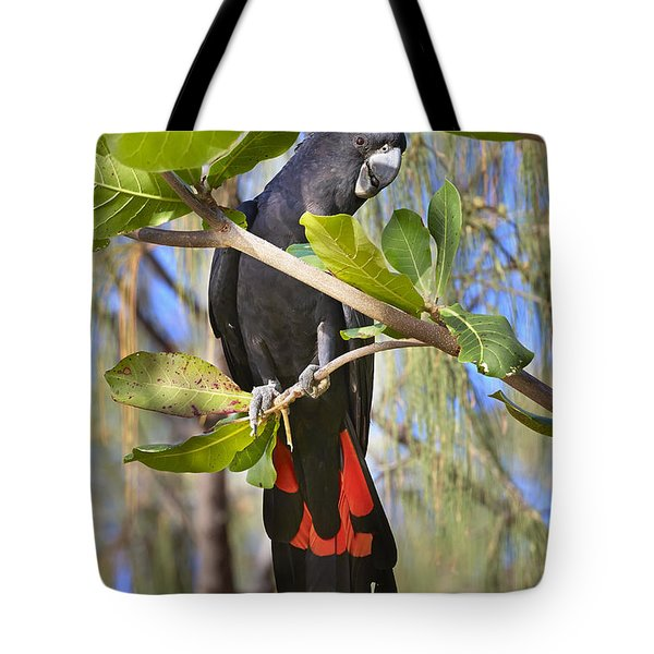Red-tailed Black-cockatoo Queensland Tote Bag