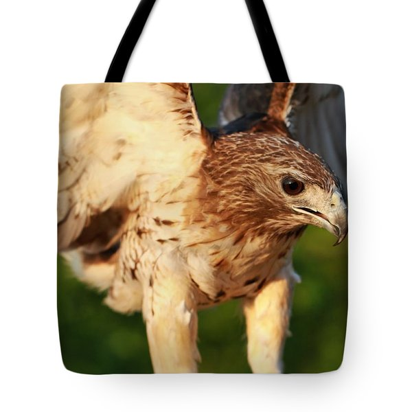 Red Tailed Hawk Hunting Tote Bag by Dan Sproul