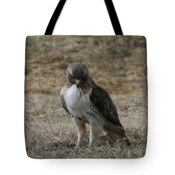 Red Tailed Hawk Tote Bag by Neal Eslinger