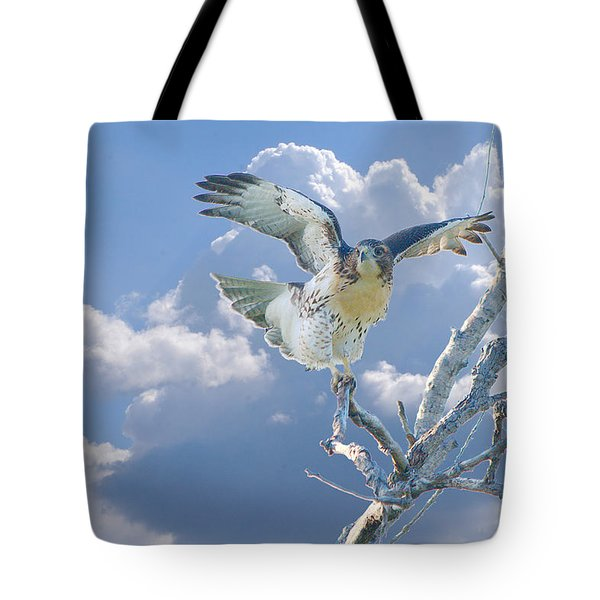 Red-tailed Hawk Pirouette Pose Tote Bag by Roy Williams