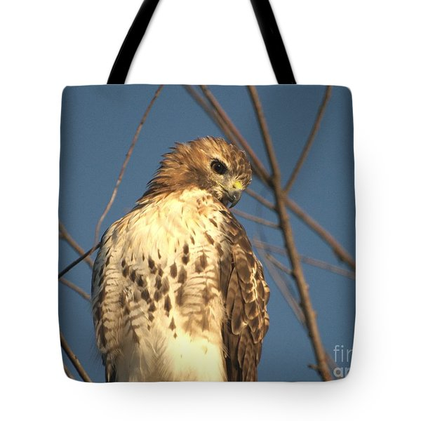 Tote Bag featuring the photograph Red Tailed Hawk  by Susan  Dimitrakopoulos