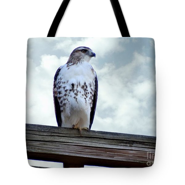Red Tailed Hawk Waiting Tote Bag