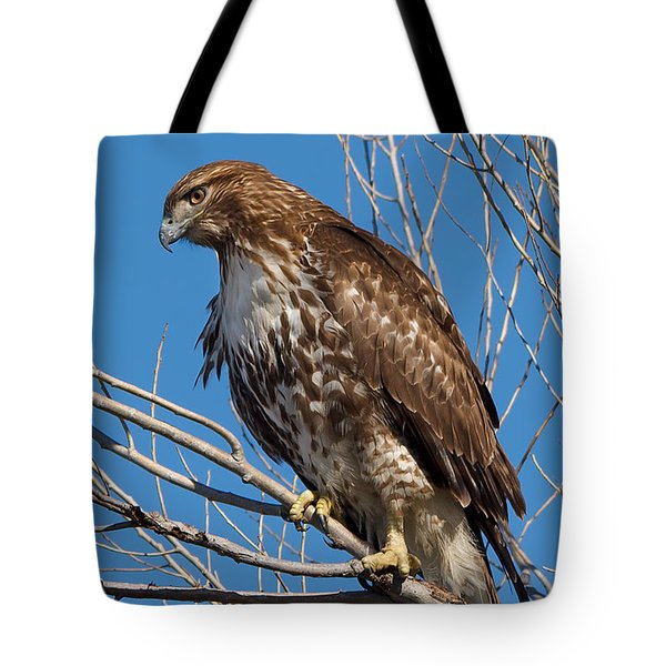 Red-tailed Hawk Watching The Ducks Tote Bag