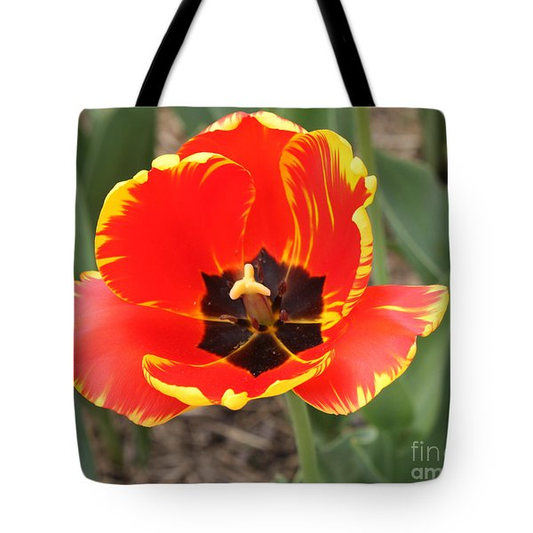 Red Tulip At Brooklyn Botanical Gardens Tote Bag by John Telfer