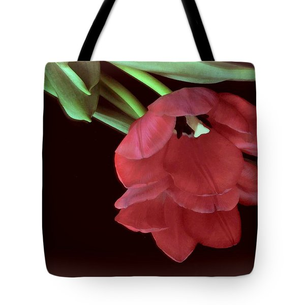 Red Tulip On Burgundy Tote Bag