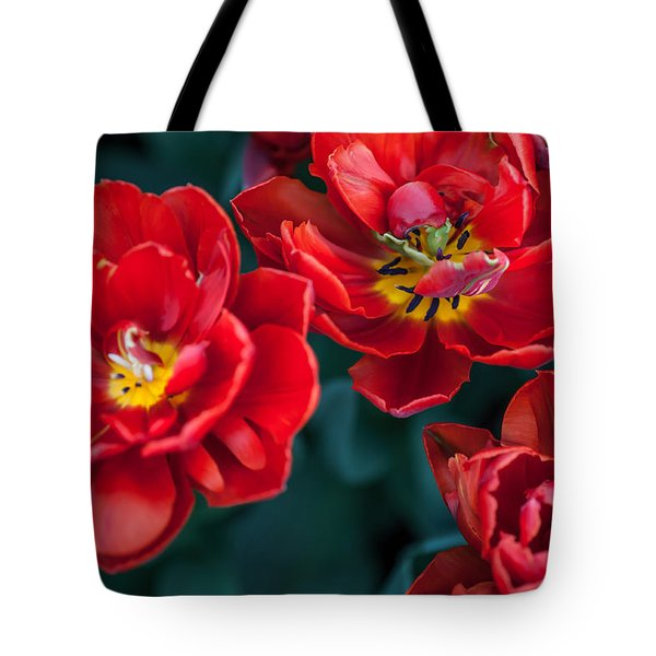 Red Tulips. The Tulips Of Holland Tote Bag