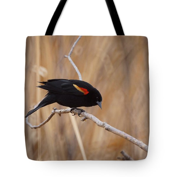 Red Winged Blackbird 1 Tote Bag