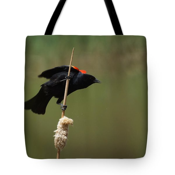 Red Winged Blackbird 3 Tote Bag