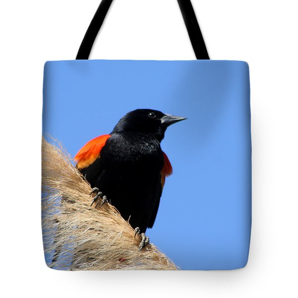 Tote Bag featuring the photograph Red-winged Blackbird by Bob and Jan Shriner