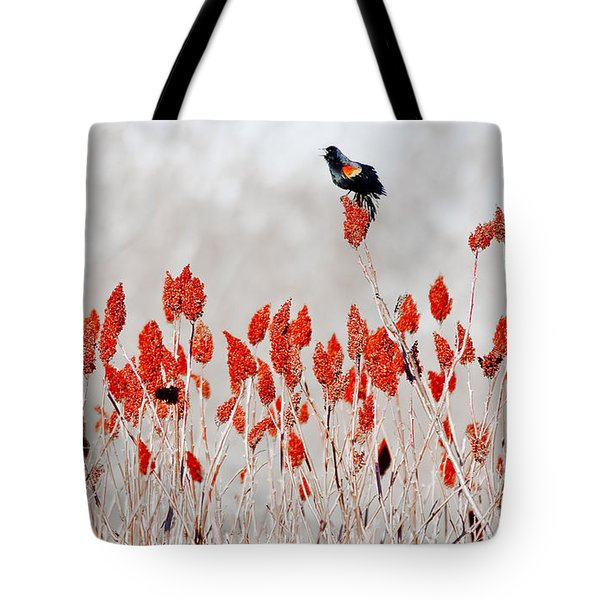 Red Winged Blackbird On Sumac Tote Bag by Steven Ralser