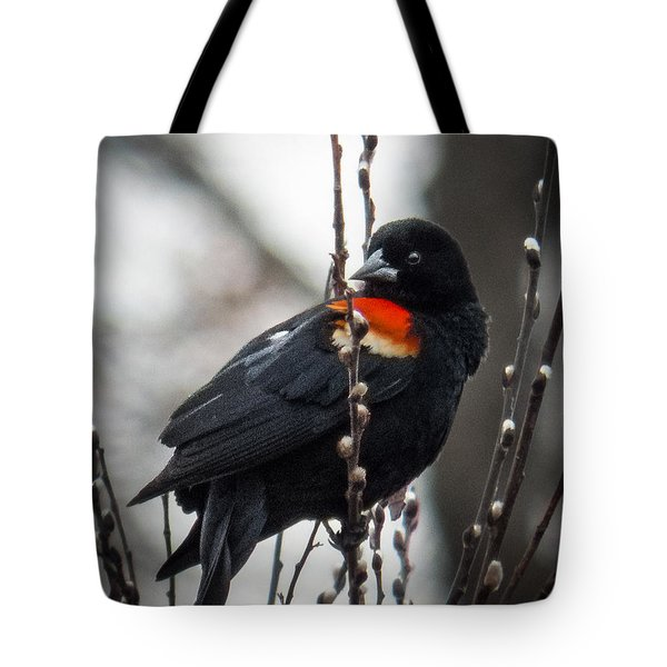 Tote Bag featuring the photograph Red Winged Blackbird In Pussy Willows by Patti Deters