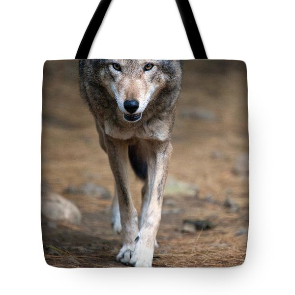 Red Wolf Strut Tote Bag by Karol Livote