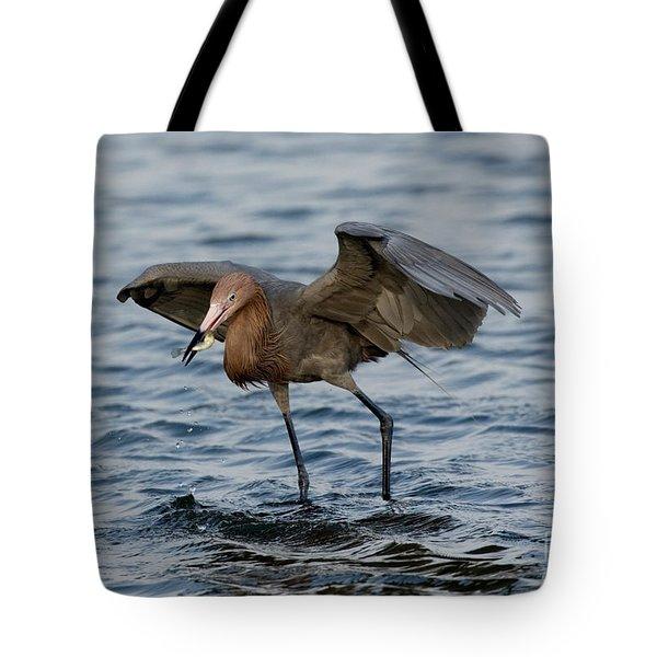 Reddish Egret Egretta Rufescens Tote Bag