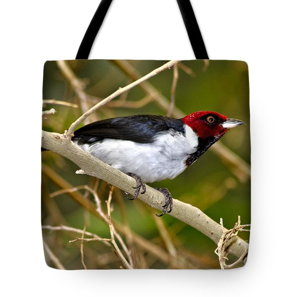 Tote Bag featuring the photograph Redhead by Adam Olsen