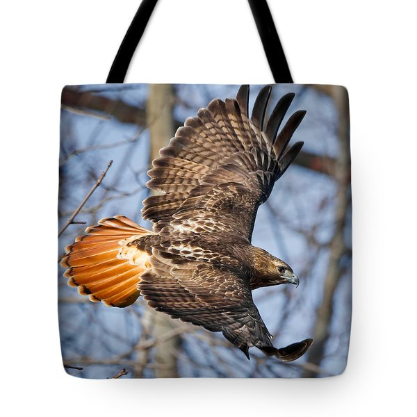 Redtail Hawk Square Tote Bag