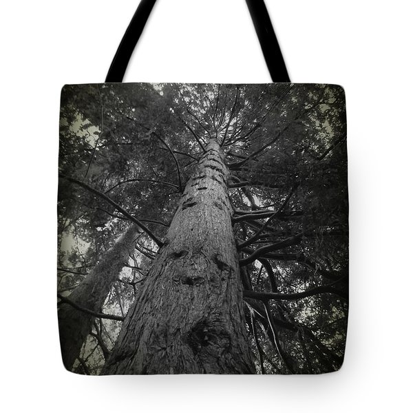 Redwood Tree Tote Bag