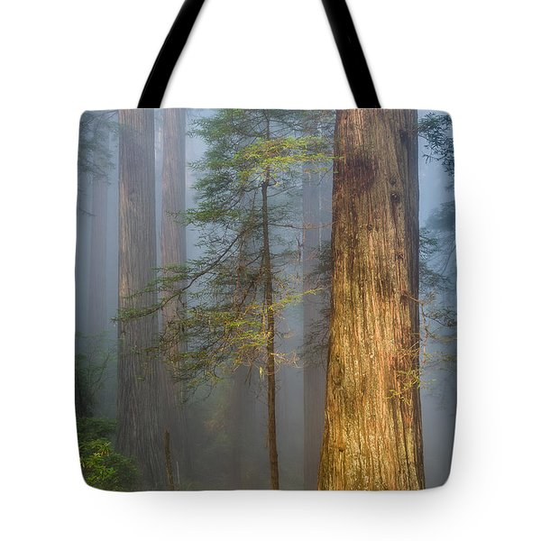Redwoods In The Blue Mist Tote Bag