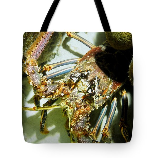 Tote Bag featuring the photograph Reef Lobster Close Up Spotlight by Amy McDaniel