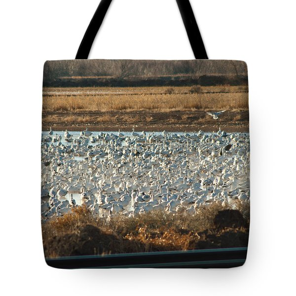 Refuge View 3 Tote Bag by James Gay