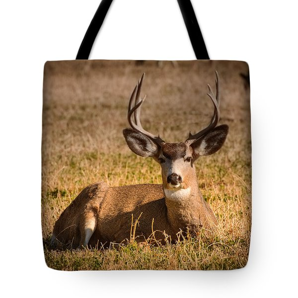 Tote Bag featuring the photograph Relaxing Buck by Janis Knight