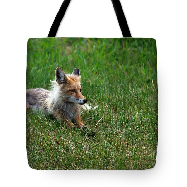 Relaxing Red Fox Tote Bag by Robert Bales