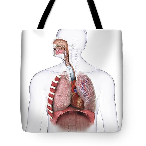 Respiratory System, Illustration Tote Bag