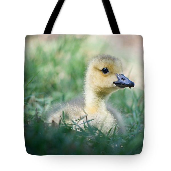 Tote Bag featuring the photograph Rest by Priya Ghose