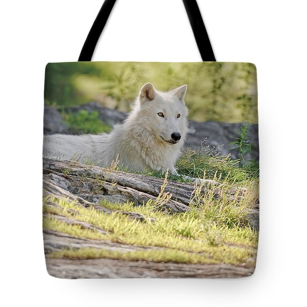 Tote Bag featuring the photograph Resting Arctic Wolf by Wolves Only