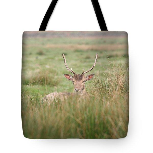 Resting Deer Tote Bag by Mark Severn