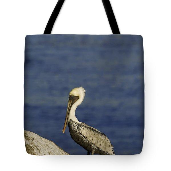 Resting Pelican Tote Bag by Sebastian Musial