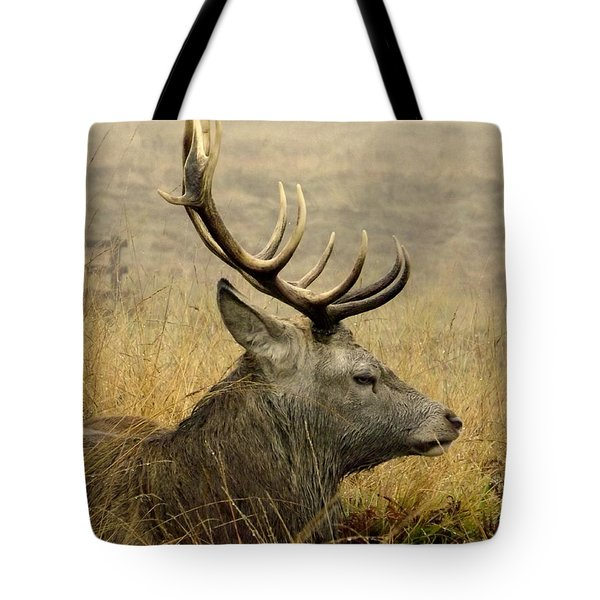 Resting Stag Tote Bag by Linsey Williams