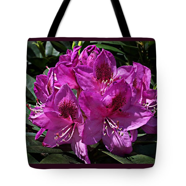 Tote Bag featuring the photograph Rhododendron ' Anah Kruschke ' by William Tanneberger