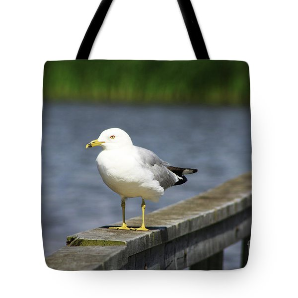 Ring-billed Gull Tote Bag by Alyce Taylor