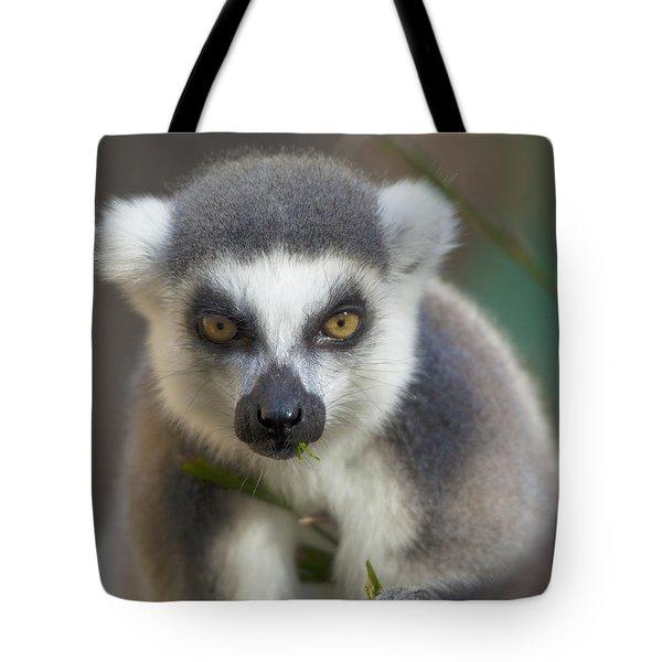 Ring Tailed Lemur Tote Bag