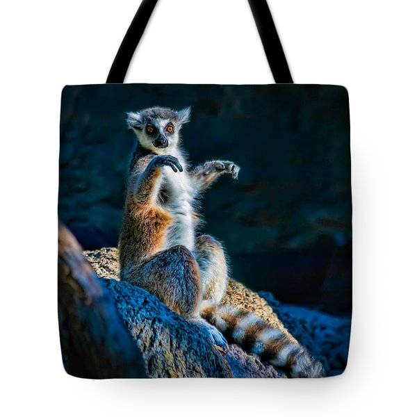 Ring-tailed Lemur Tote Bag by Tim Stanley