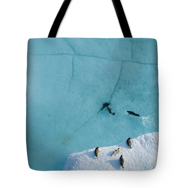 Ringed Seals Hauled Out On Multi-layer Tote Bag