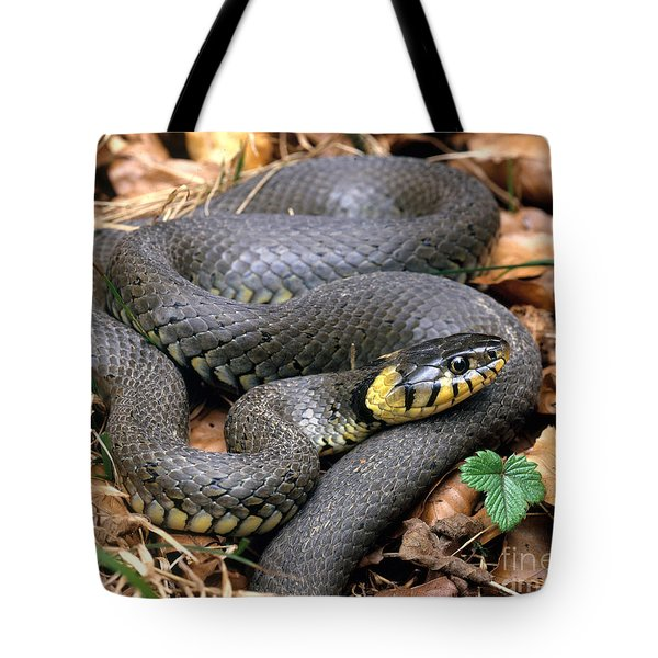 Ringed Snake Tote Bag