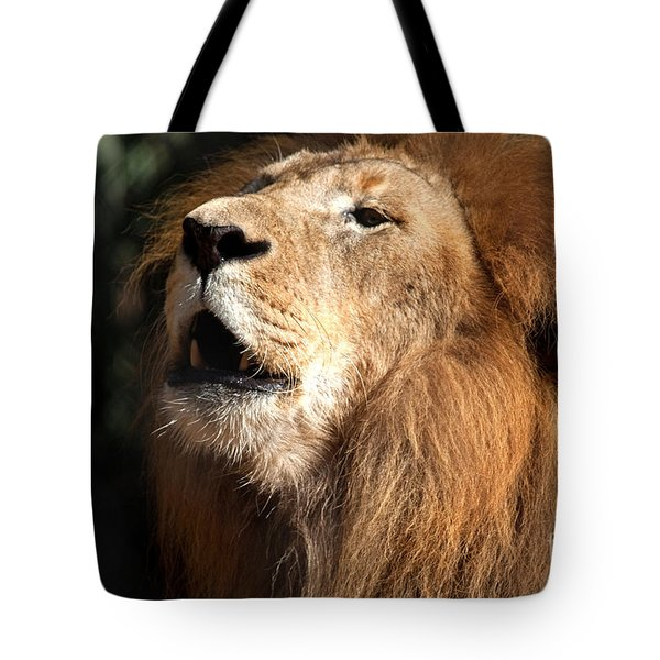 Tote Bag featuring the photograph Roar - African Lion by Meg Rousher