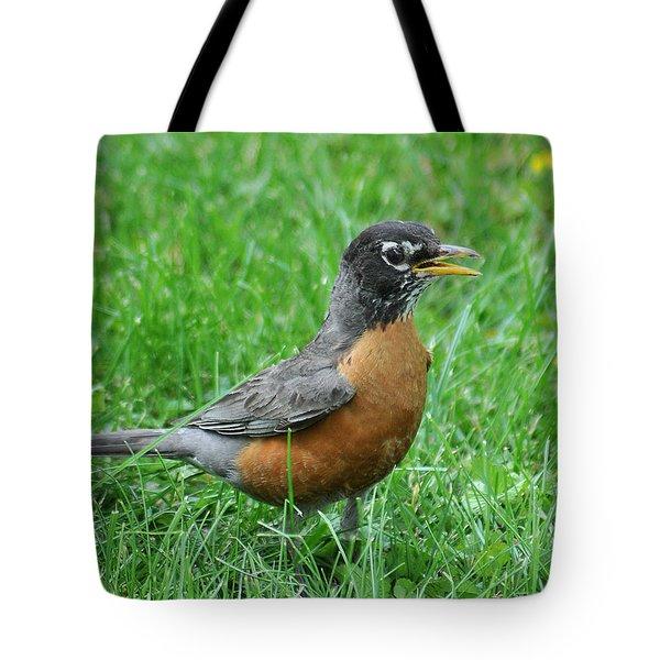 Robin 334 Tote Bag